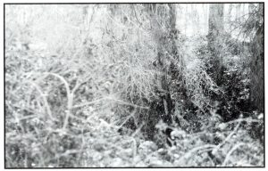 12-la-vegetacion-primaria-en-las-riberas-del-genil