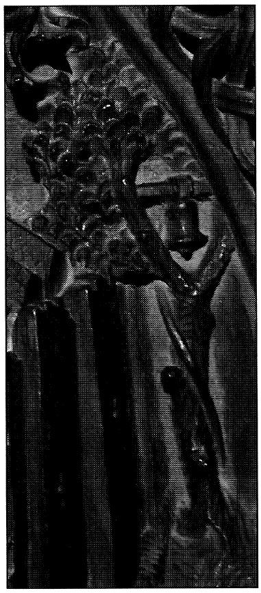 Figura 6. Detalle del árbol que sostiene una campana junto al Real de Santa Fe en el tablero de la sillería del coro bajo de la Catedral de Toledo en el que se representó Santa Fe. García Pulido y col. (2004)